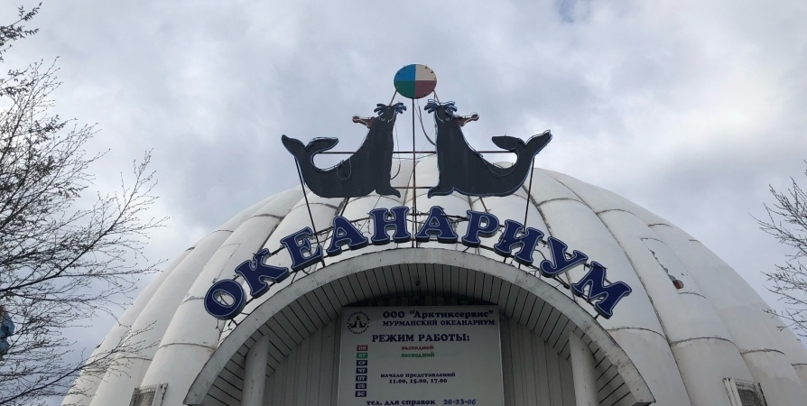 Раскуплены все билеты в океанариум Мурманска на новогодние каникулы