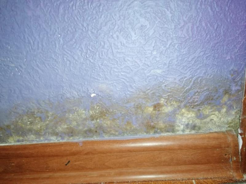 Мурманчане после прорыва канализации в подвале: Плесень из квартир не исчезла