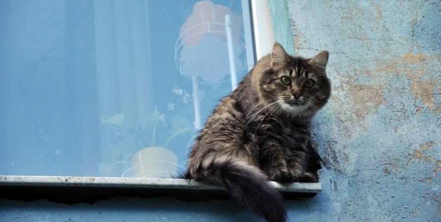 Северянку обязали выселить более 20 кошек и убрать тараканов
