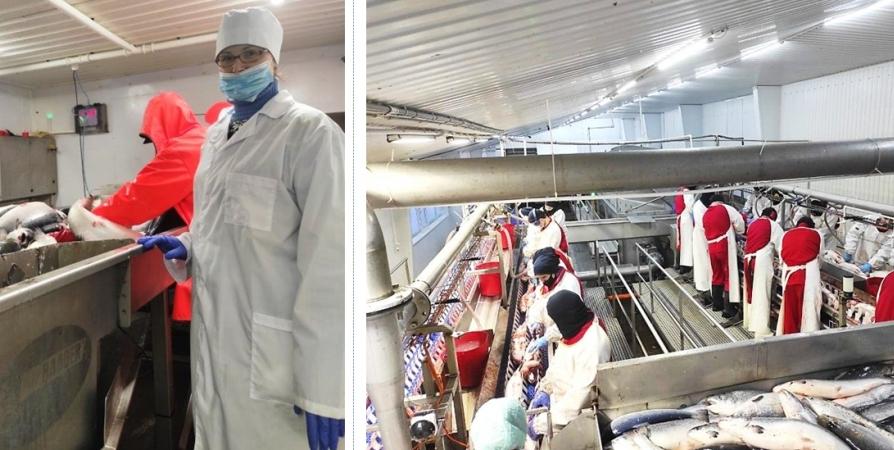 9 тонн охлажденной рыбы с живыми личинками обнаружили в Мурманске
