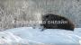 На свалке под Кандалакшей замечен медведь-шатун