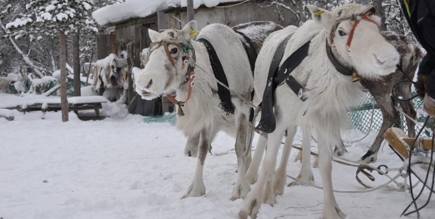 14 марта в Мурманске откроют Праздник Севера