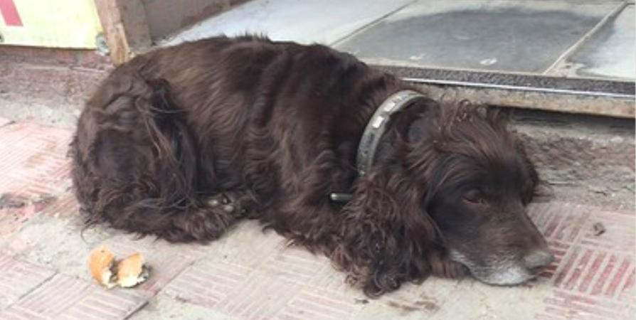 Информация о побитой собаке у мурманского магазина не подтвердилась