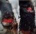 В Североморске сообщают о живодере и снятой со щенка шкуре