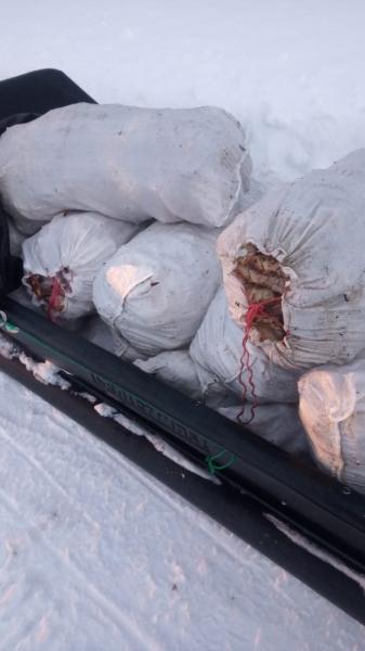 Возле Туманного задержали браконьера с полтонной краба на 4 млн