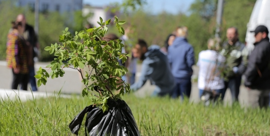 В Мурманской области посадят деревья к 80-летию с начала войны