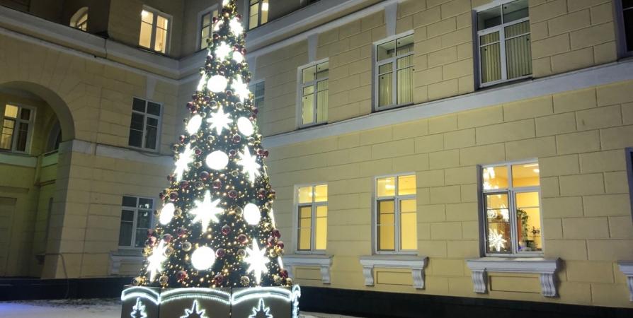 Правительству Заполярья новогоднюю елку подарил центр горразвития