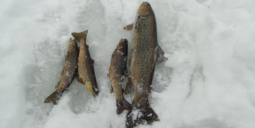 Северянам напомнили о запрете рыбалки в погранзоне