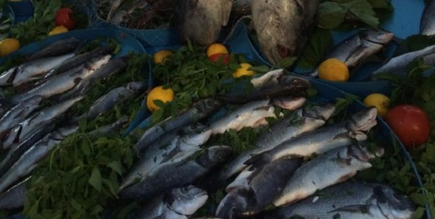 В апреле ярмарка «Наша рыба» возобновится в Мурманске