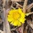 Первые весенние цветы запечатлели в Кандалакшском заповеднике
