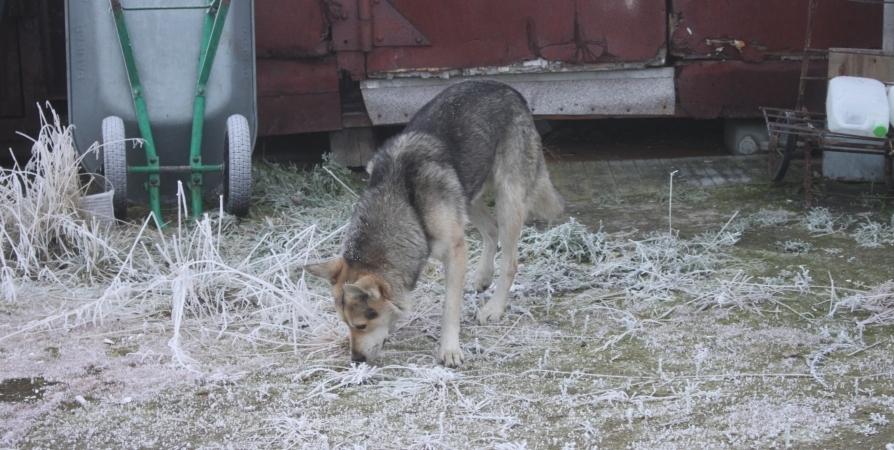 На Аскольдовцев в Мурманске велосипедиста покусала собака