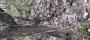 В лесу жители Кандалакши нашли труп собаки