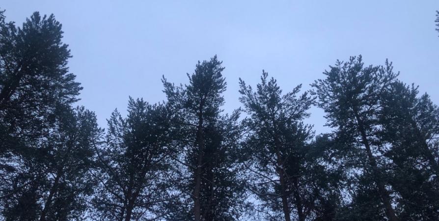 В Кольском районе ищут добровольцев для тушения лесных пожаров