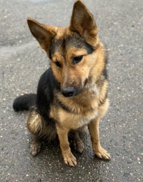 В Мурманске семья выгнала из дома собаку после развода