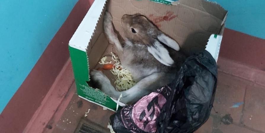 В Мурманске ищут передержку для сбитого машиной зайца