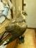 В Кировске поймали полевого луня с переломом