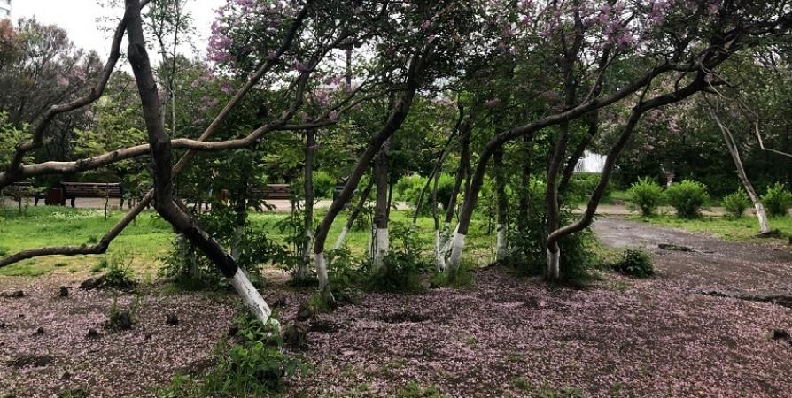 В Мурманске 11 июня посадят деревья для «Сада памяти»