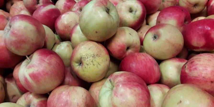 Яблоки подешевели в Мурманской области почти на 1%